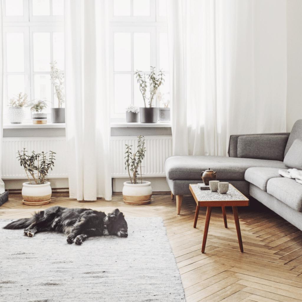 Huisdier op houten vloer